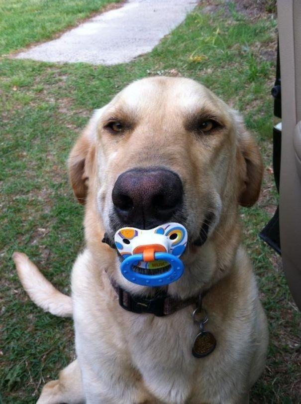 """""""Моя подруга недавно стала мамой и вот, что её собака ей принесла"""" вещи. милота, домашний питомец, животные, кошка, подарки, собака"""