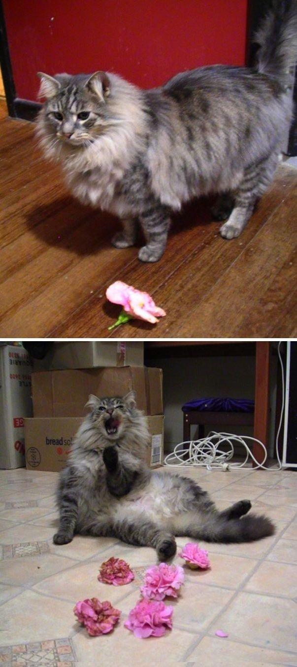 """""""Это мой кот Слэш и он приносит мне цветы каждую ночь. Настоящий джентльмен"""" вещи. милота, домашний питомец, животные, кошка, подарки, собака"""