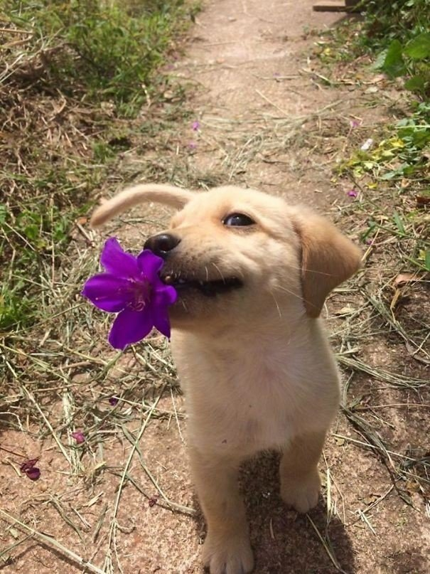 """""""Мой щенок принёс мне небольшой подарок"""" вещи. милота, домашний питомец, животные, кошка, подарки, собака"""