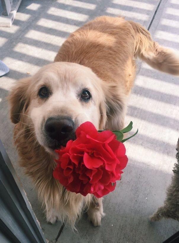 """""""Моя собака слишком хороша для этого мира, она принесла мне цветок"""" вещи. милота, домашний питомец, животные, кошка, подарки, собака"""