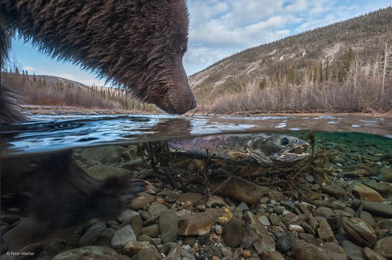 Самые красивые фотографии дикой природы в 2017 году животные, природа, фотография