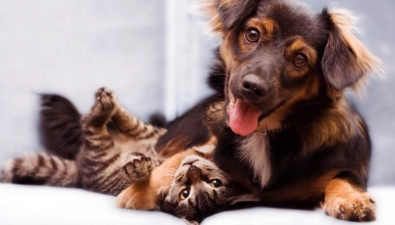 Если бы собаки и кошки вели дневник. Сравним записи? животные, инетресно, кошки, собаки, фото