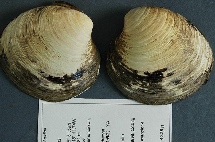 Моллюск Мин   вечные животные, интересно, растения, факты