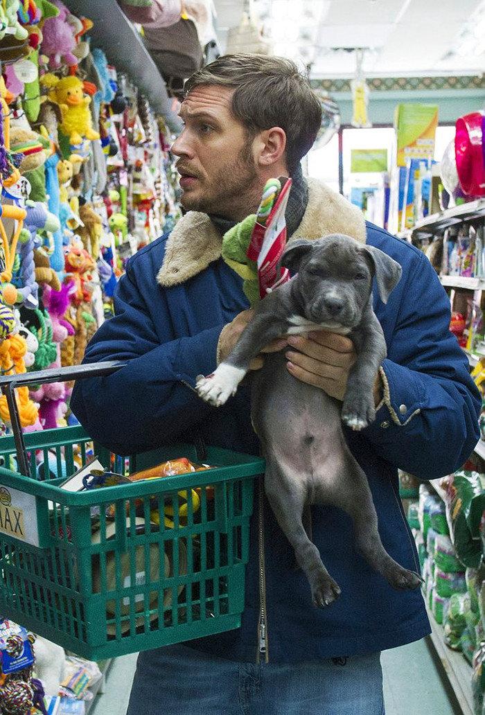 За покупками с малышом актер, животные, кино, милота, собака, собаки, том харди, фильм