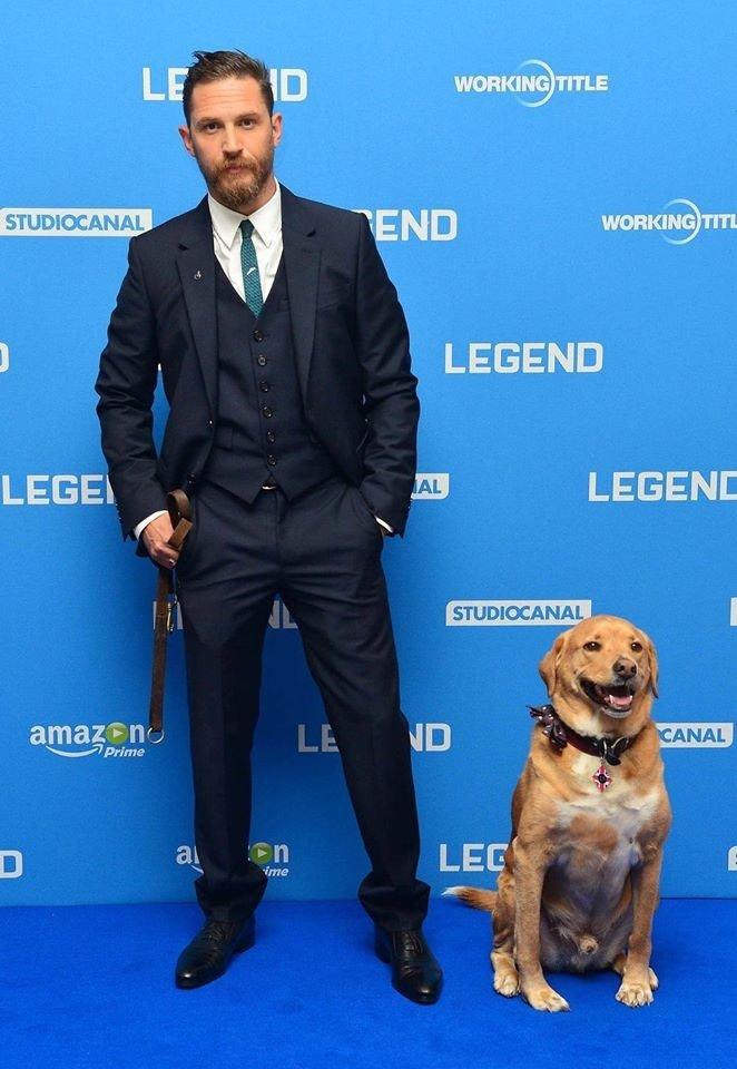 """С Вуди на премьере фильма """"Легенда"""" актер, животные, кино, милота, собака, собаки, том харди, фильм"""