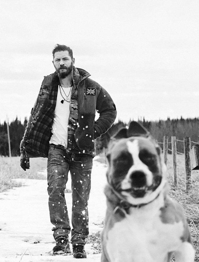 Зимой на прогулке актер, животные, кино, милота, собака, собаки, том харди, фильм