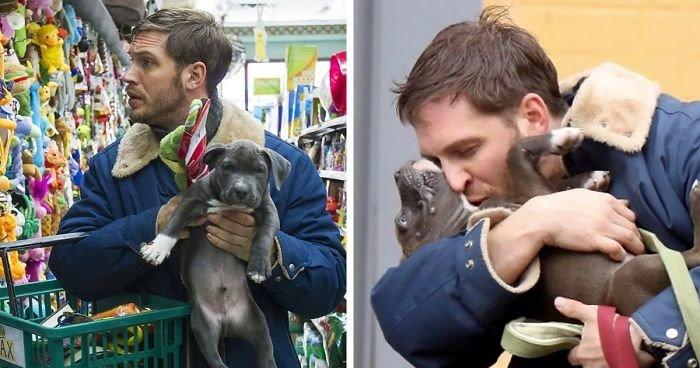 Том Харди с собаками — одна из самых милых вещей, что вы увидите сегодня актер, животные, кино, милота, собака, собаки, том харди, фильм