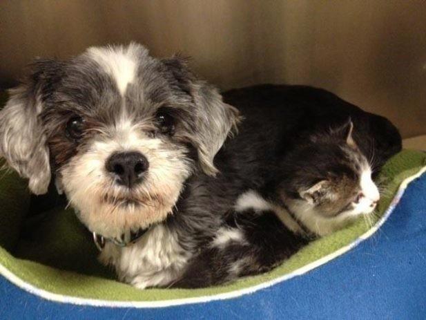 Собака рисковала жизнью, чтобы спасти крошечного котенка. а потом выкормила его, как щенка котенок, собаки, спасение