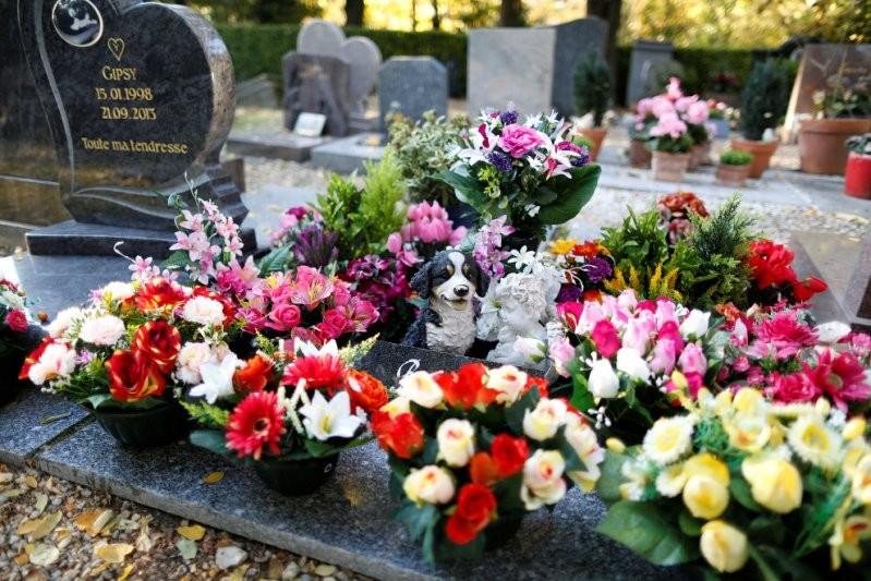 Кладбище собак во Франции домашние животные, животные, кладбище, кладбище собак, франция