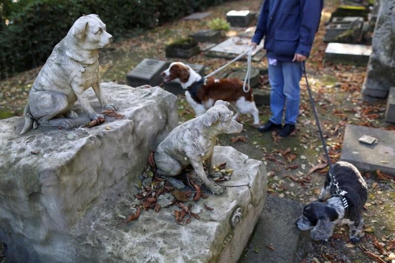 С 1899 года тут захоронено более 40 000 животных, включая собак, кошек, обезьян, лошадей, кроликов, хомяков, мышей, птиц и рыб и даже львов. домашние животные, животные, кладбище, кладбище собак, франция
