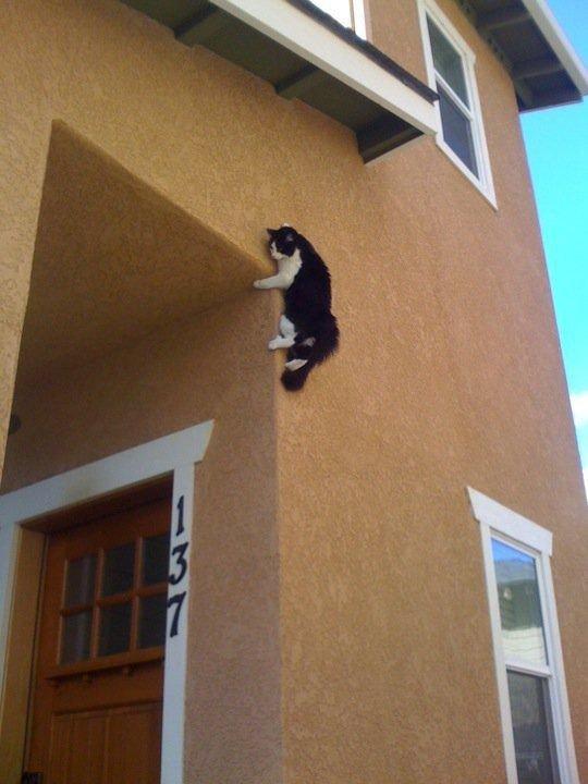 9. Кот-паук? животные, кот, кошка, ловушка, любопытство, ситуация, фото