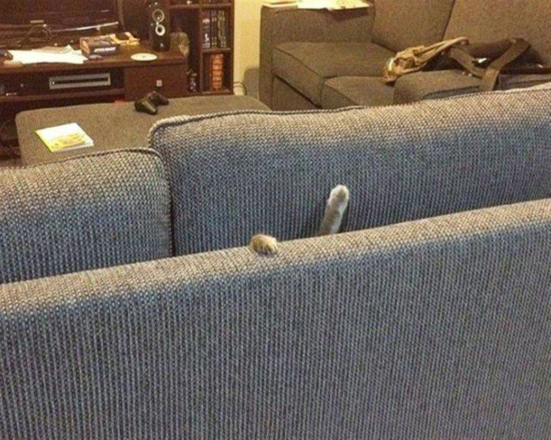 1. Не диван, а трясина какая-то  животные, кот, кошка, ловушка, любопытство, ситуация, фото