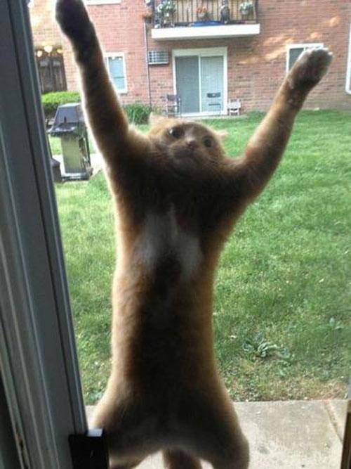 5. Тот самый взгляд, когда когти застряли животные, кот, кошка, ловушка, любопытство, ситуация, фото