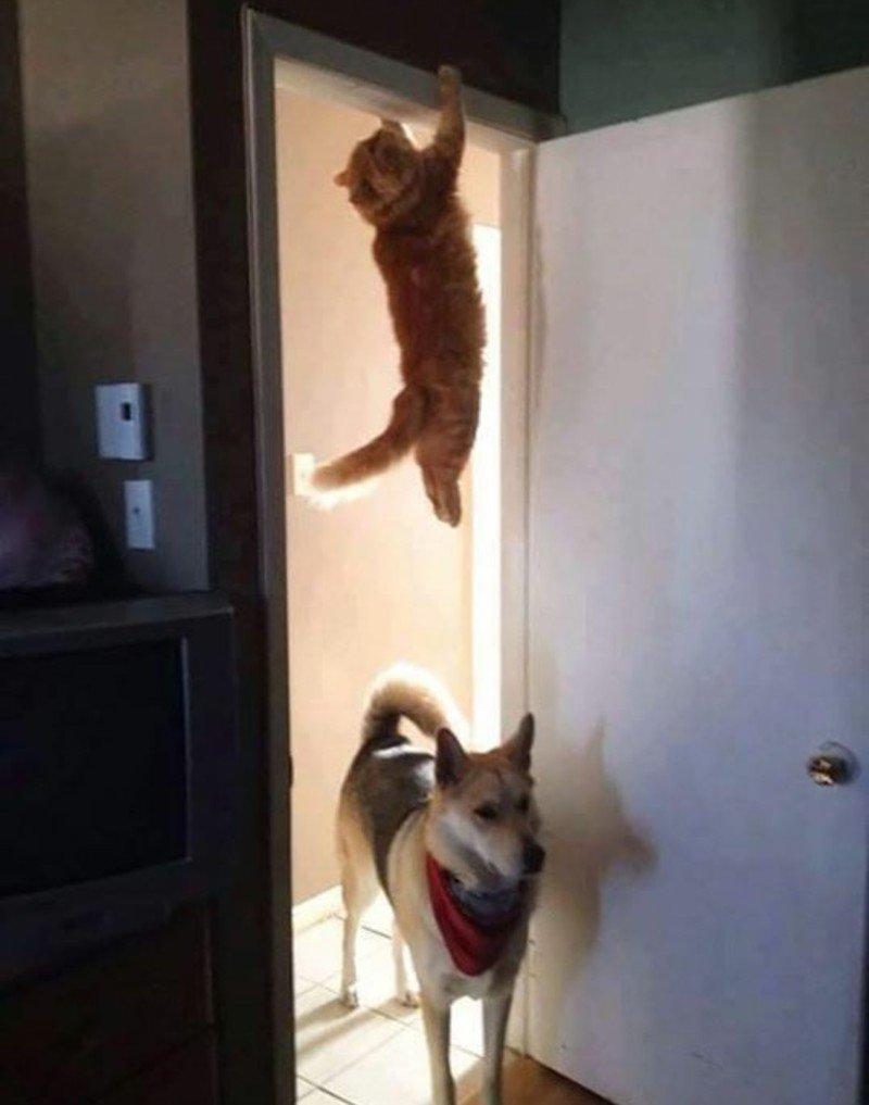 10. За секунду до... животные, кот, кошка, ловушка, любопытство, ситуация, фото