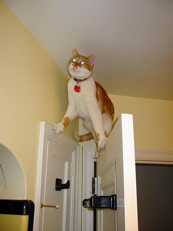8. Человек, спасай! животные, кот, кошка, ловушка, любопытство, ситуация, фото