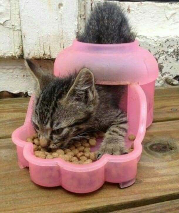 6. Кажется, ему вполне комфортно  животные, кот, кошка, ловушка, любопытство, ситуация, фото
