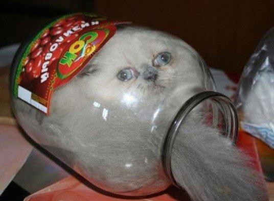 2. Законсервировался  животные, кот, кошка, ловушка, любопытство, ситуация, фото