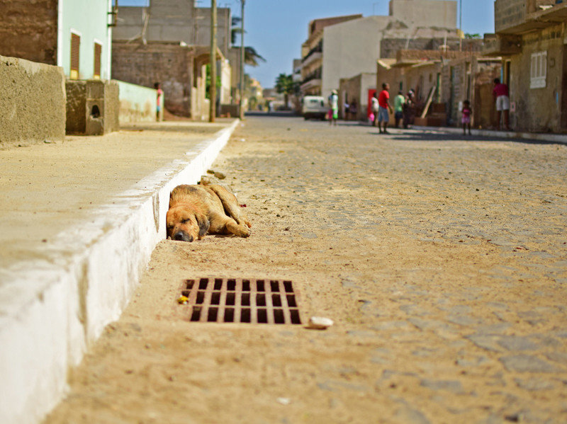 Образ собаки в городском пространстве город, городское пространство, животные, собака, улица, эстетика