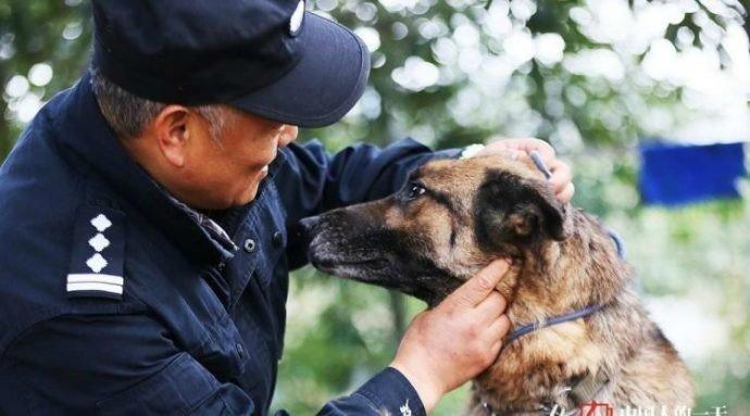 Они состарились и стали ненужными… мужчина придумал, как помочь пожилым собакам! приют, собаки, спасение