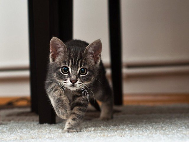 Вот пришел ты домой, а там сюрприз — твоя собака завела себе котёнка животные, новости, позитив