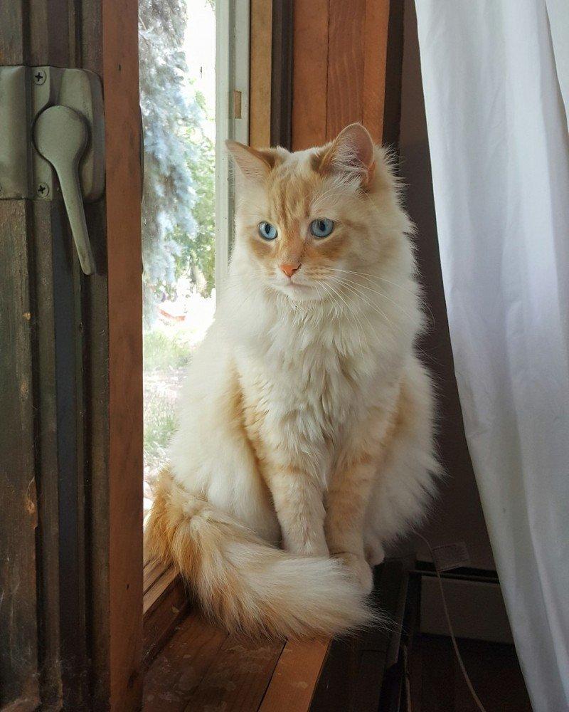 Кот как диснеевская принцесса притягивает к себе разных животных белка, гости, животные, кот, олень
