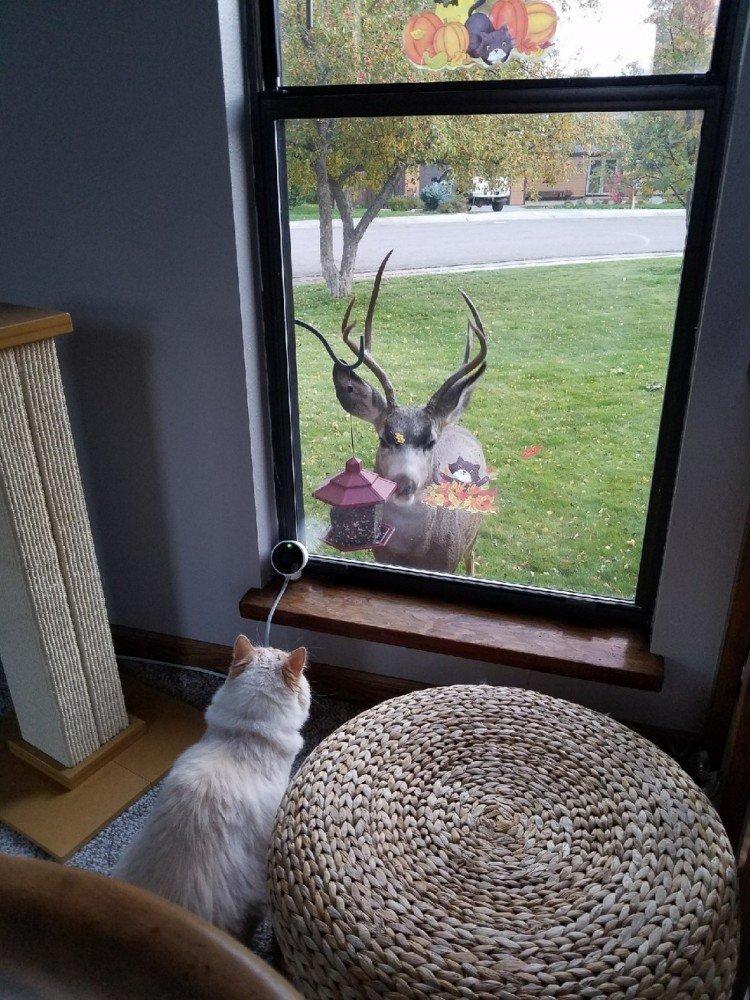После ее прихода люди поставили за окном кормушку, но следующим к окну подошел... дружелюбный олень. белка, гости, животные, кот, олень