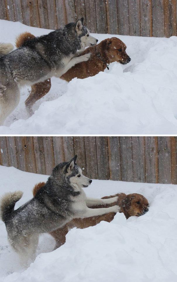 Собака-негодяйка животные, забавно, наглосты, пакости, питомцы, фото, шалости, юмор