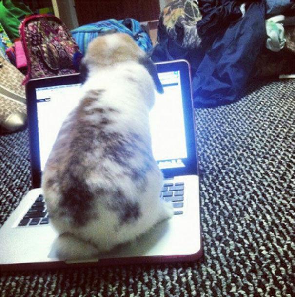 Наглецы встречаются и среди кроликов животные, забавно, наглосты, пакости, питомцы, фото, шалости, юмор