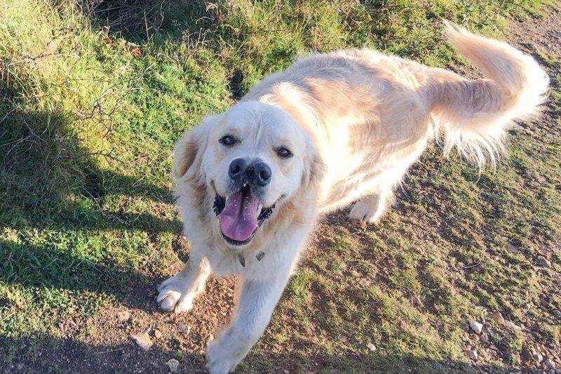 Пёс двумя носами нашёл дом из-за своей уникальной морды домашний питомец, животные, милота, нос, собака