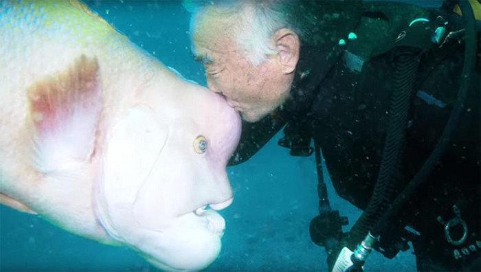 Японский дайвер уже 25 лет навещает своего лучшего друга, хотя это и страшненькая рыба дайвер, дружба, животные, морские обитатели, япония.