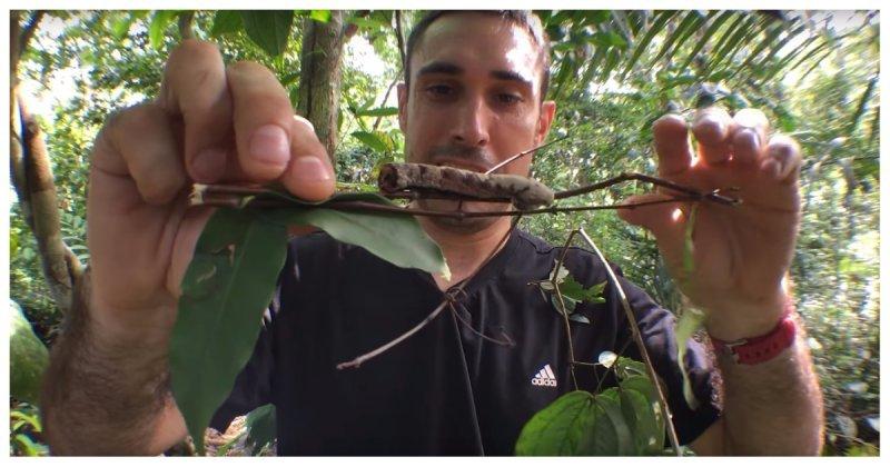 Эта гусеница превращается в змею, когда чувствует какую-то опасность в мире, видео, гусеница, животные, интересное, маскировка, мимикрия