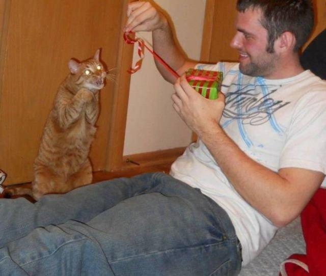 Кошка человеку друг друг, животные, кошки, люди, мими