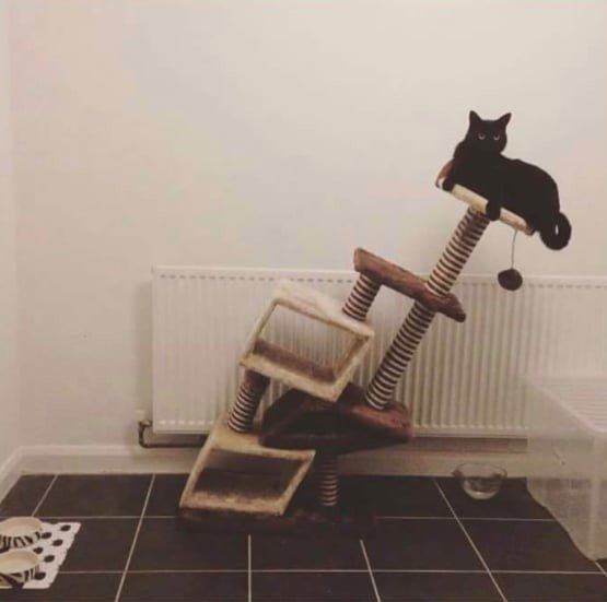 25. Совершенно невозмутимая кошка как бы напоминает нам всем о том, что в любой ситуации главное - сохранять лицо забавные коты, кот, коты, кошачий рай, кошки, смешные  кошки, фото котов