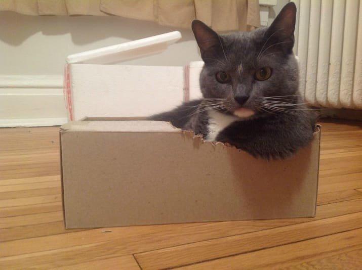 23. Я вас слушаю! Вы что-то хотели? забавные коты, кот, коты, кошачий рай, кошки, смешные  кошки, фото котов