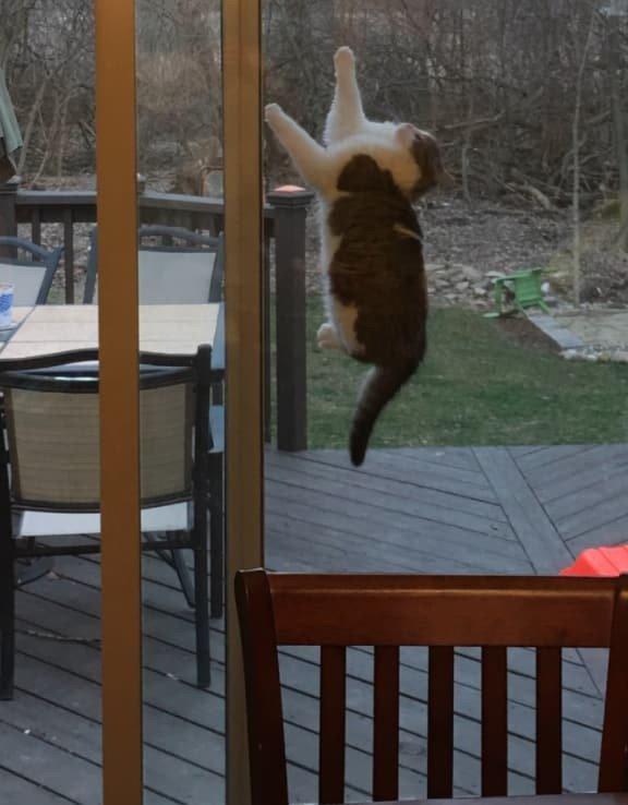 13. Момент, застывший во времени забавные коты, кот, коты, кошачий рай, кошки, смешные  кошки, фото котов