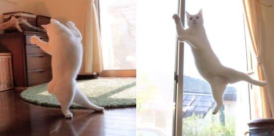 8. А теперь - дискотека! С обязательным танцем на шесте забавные коты, кот, коты, кошачий рай, кошки, смешные  кошки, фото котов