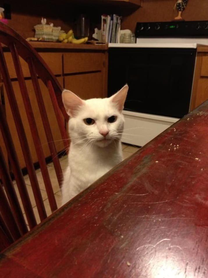 """14. Крайне недовольный мужик. """"Кота должен покормить ты!"""" забавные коты, кот, коты, кошачий рай, кошки, смешные  кошки, фото котов"""