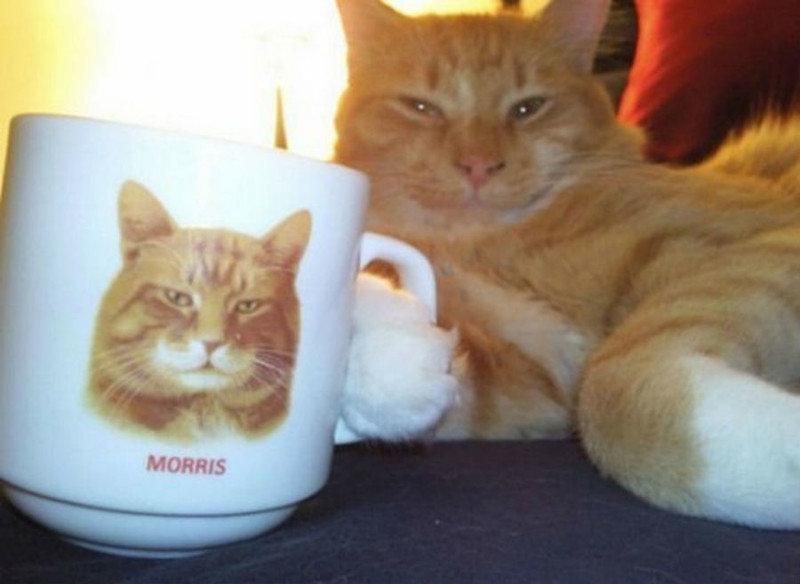 30. Это Моррис. А чего добился ты? забавные коты, кот, коты, кошачий рай, кошки, смешные  кошки, фото котов