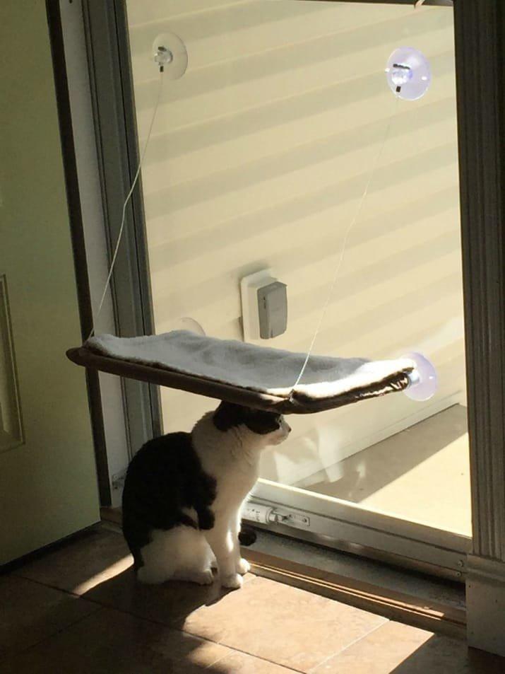 3. А этот неблагодарный засранец плевать хотел на заботу хозяина забавные коты, кот, коты, кошачий рай, кошки, смешные  кошки, фото котов