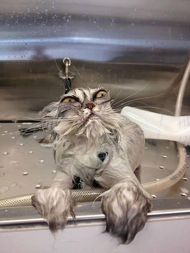 22. Мокрый приятель. Похож не на кошку, а на совершенно новый безумный вид забавные коты, кот, коты, кошачий рай, кошки, смешные  кошки, фото котов