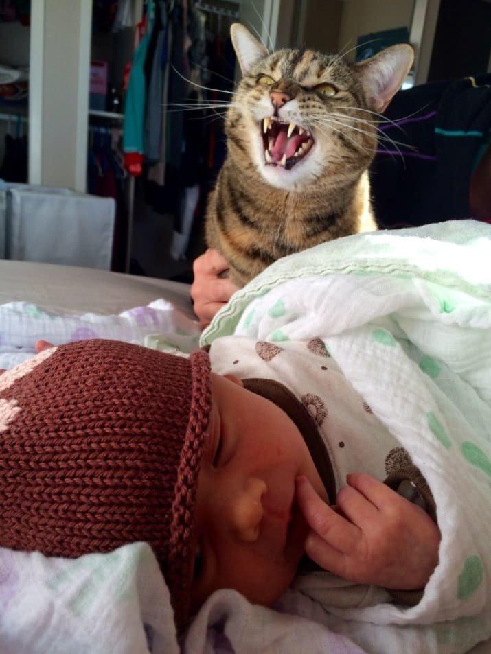 """20. Не очень довольный """"старший брат"""". Наверное, ревнует забавные коты, кот, коты, кошачий рай, кошки, смешные  кошки, фото котов"""