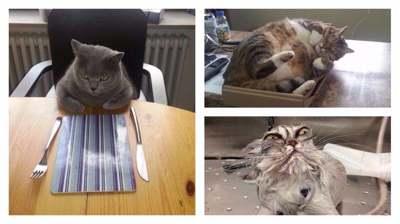 30 смешных кошачьих фотографий из интернета забавные коты, кот, коты, кошачий рай, кошки, смешные  кошки, фото котов