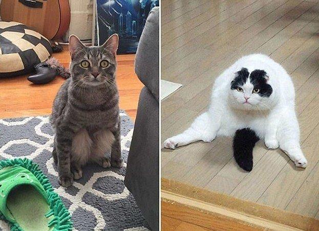 Чего уставился? Еду давай! животные, забавно, кошки, кршки как люди, посадка, смешно, странные позы, фото