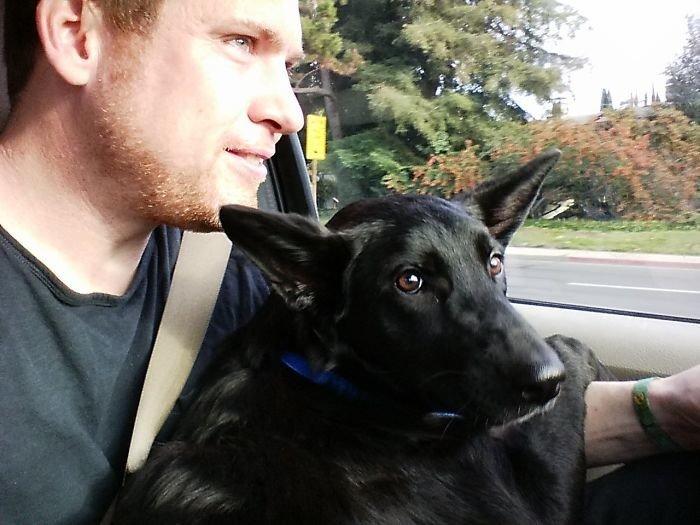 """""""Всю дорогу домой он хотел сидеть только на моих коленях - а ведь в нем 21 килограмм!"""" дружба, животные, любовь, любовь с первого взгляда, первая встреча, пес и я, собаки, хозяева"""