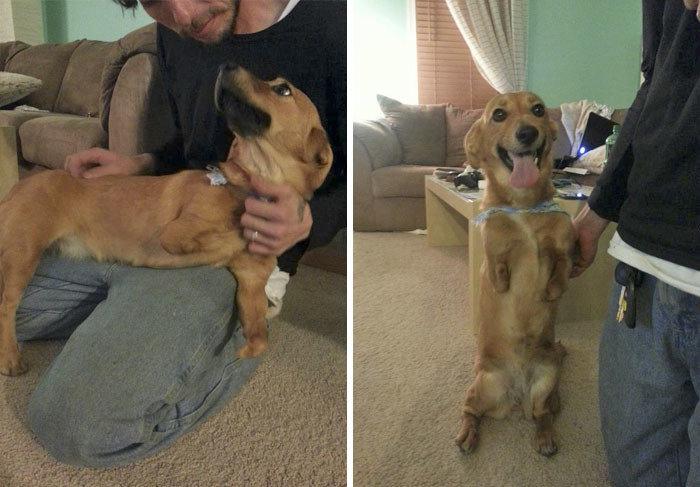 """""""Лучший день в жизни Хоуп - день, когда она встретилась с папочкой!"""" дружба, животные, любовь, любовь с первого взгляда, первая встреча, пес и я, собаки, хозяева"""