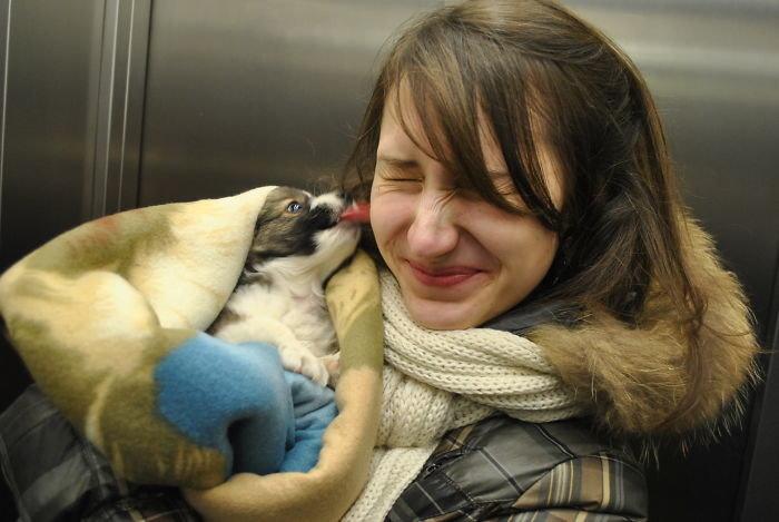 """""""Любовь с первого взгляда!"""" дружба, животные, любовь, любовь с первого взгляда, первая встреча, пес и я, собаки, хозяева"""