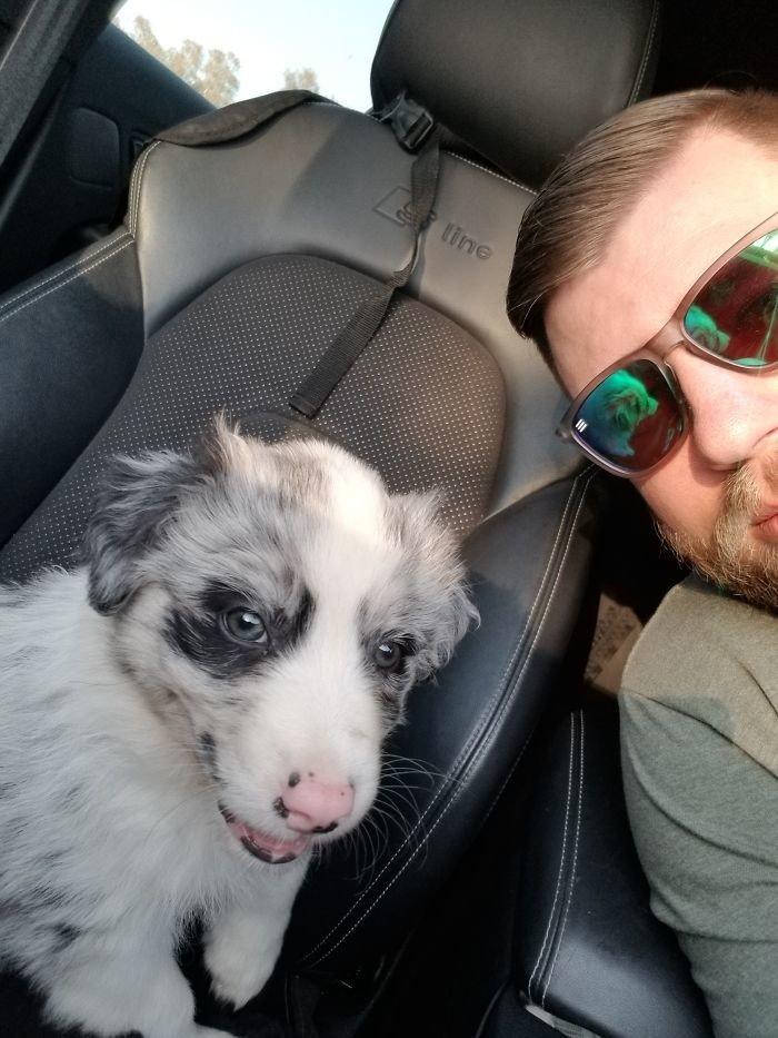 """""""Моя австралийская овчарка"""" дружба, животные, любовь, любовь с первого взгляда, первая встреча, пес и я, собаки, хозяева"""