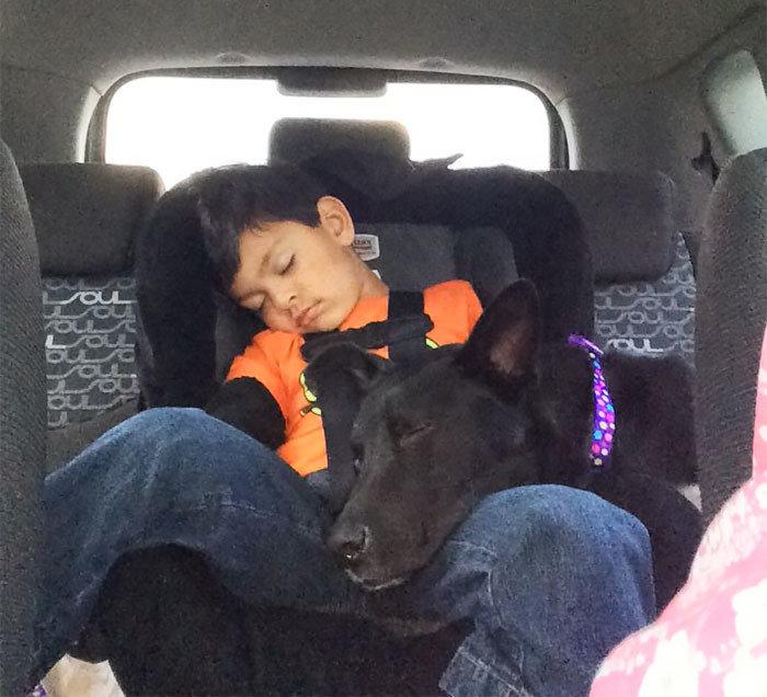 """""""Мой сын и наша собака через 20 минут после того, как мы взяли ее из приюта"""" дружба, животные, любовь, любовь с первого взгляда, первая встреча, пес и я, собаки, хозяева"""