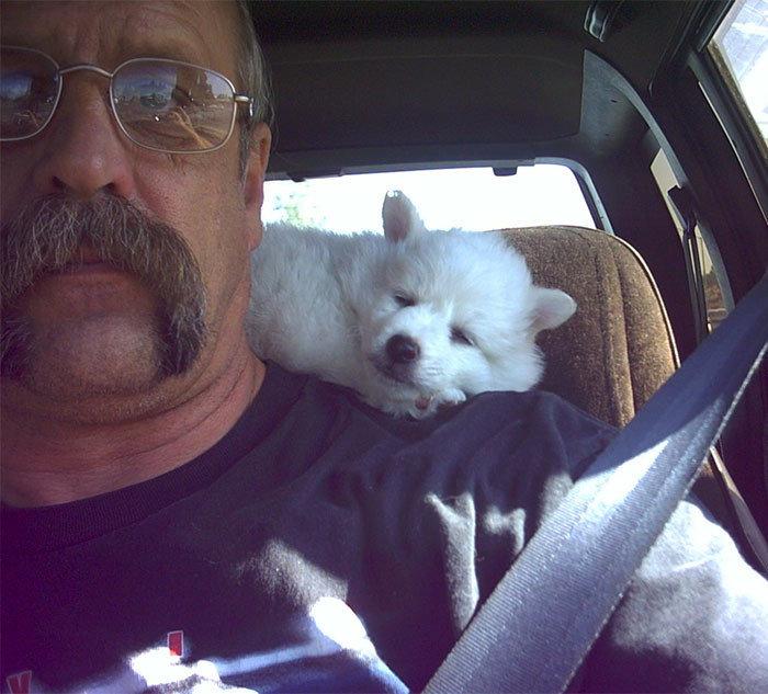 """""""13 лет назад. Коди едет в новый дом"""" дружба, животные, любовь, любовь с первого взгляда, первая встреча, пес и я, собаки, хозяева"""