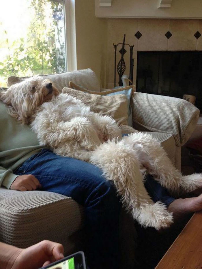 Релакс братья меньшие, животные, наши копии, позы, псы как люди, смешно, собака и хозяин, собаки